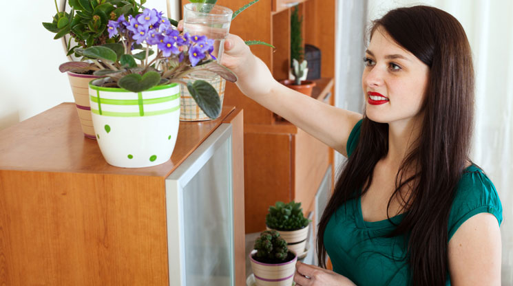 How To Start Your Own Indoor Garden